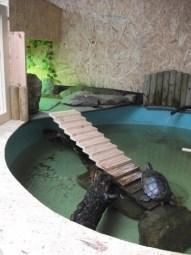 Fernvalley B Bell Terrapin pool