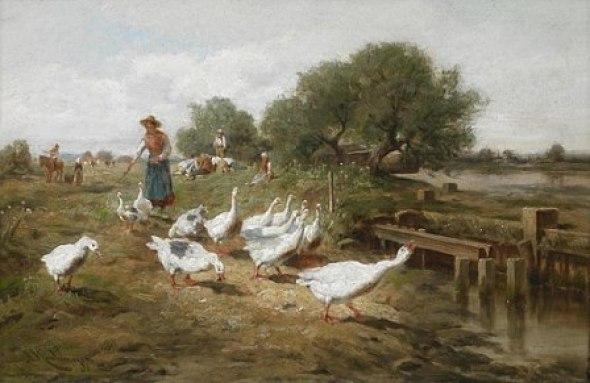 Goose herd