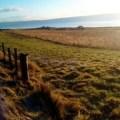 winter animal feed – Neils fodder field N Morrison