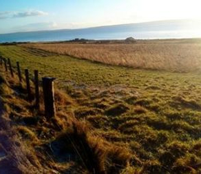 winter animal feed - Neils fodder field N Morrison