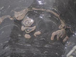 stromatolite B Bell