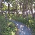 Secret Garden through the trees