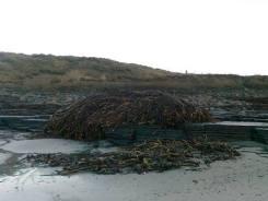 Seaweed mound