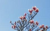 Spring 1 LM