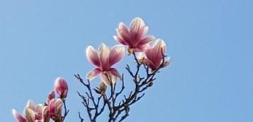Spring 5 LM