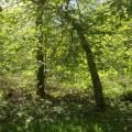 Stornoway 8