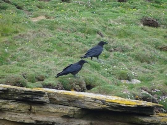 Marwick ravens Bell