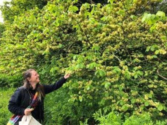 foraging fortnight 2