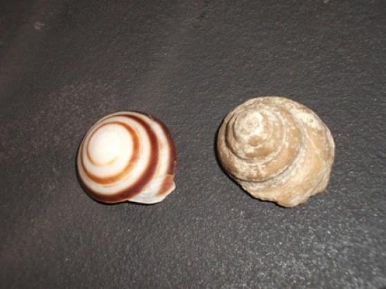 shells Bell