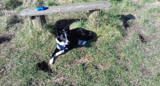 Bobby, a Border Collie from Aberdeen, ended up missing for over 24 hours after being spooked by fireworks