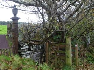 Binscarth Woods Autumn St Magnus Way credit: Bell