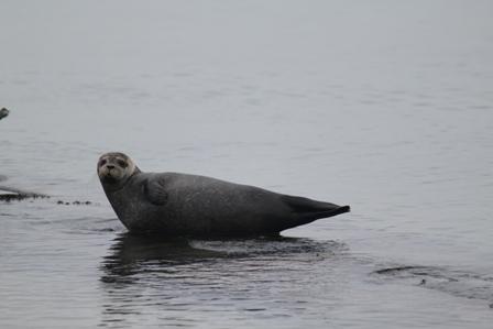 seal Stuart Little