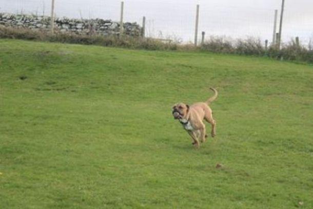 Holm Sanctuary dog rescue Loving Homes