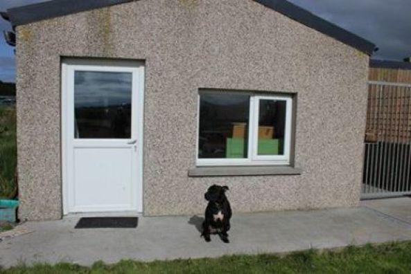 Holm sanctuary  dog rescue centre