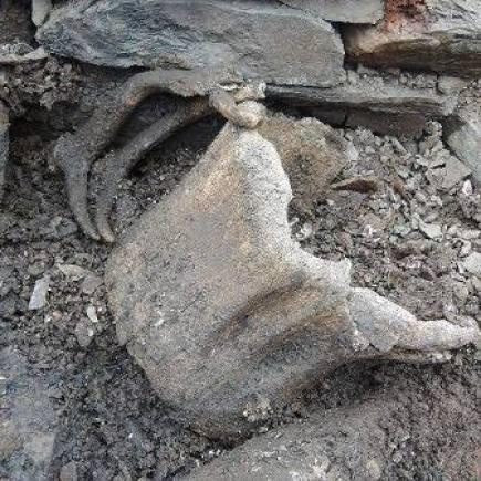 The Carins whalebone image UHI Archaeology