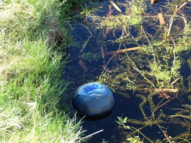 pond Bell