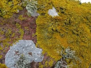 lichen credit Bell