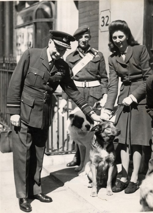 Brian DM also known as 'Bing' hero dog WW2