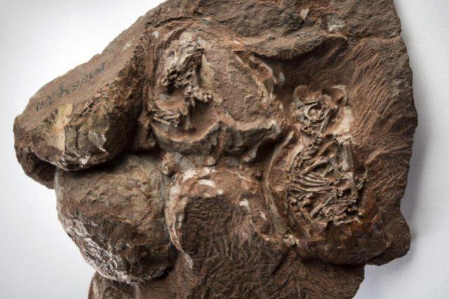 dinosaur embryos