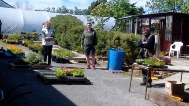 plant sale 3 Nick Morrison