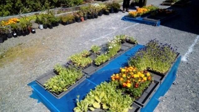 plant sale 4 Nick Morrison