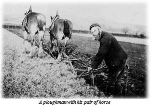 ploughman with 2 horses Ian Cooper