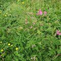wildflowers credit Bernie Bell