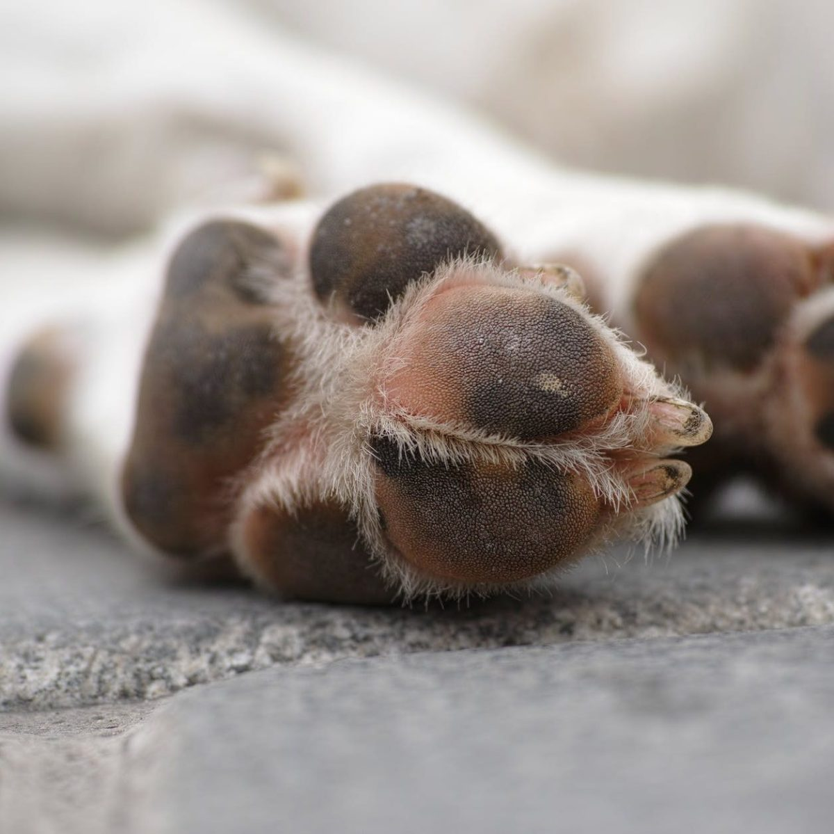 shallow focus photography of white dog s paws