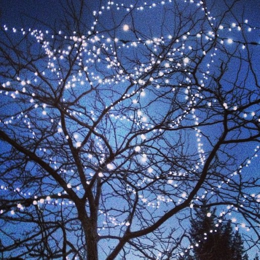 The holiday lights are still adorning the trees on Northwestern University's campus. Can you spot the moon?