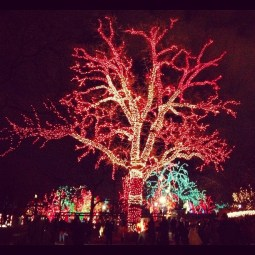 Chicago's Lincoln Park Zoo during the 2012 holiday season.