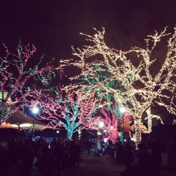 Looks a bit like a magical forest at the Lincoln Park Zoo.