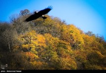 Golestan, Iran - Autumn 03