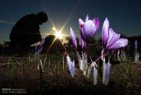 Iranian Saffron Farm 08