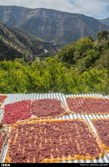 Kermanshah, Iran - Paveh, Pomegranate Harvest 2014 08