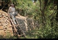 Kurdistan, Iran - Zhivar, Sarvabad, Pomegranate Harvest 2014 09