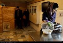 Tehran, Iran - Veterinary Hospital in Tehran 10