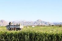 Hormozgan, Iran - Minab, Harvesting Watermelons for Yalda 08