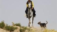 Heidari, Kamran - Film 2012 - My name is Negahdar Jamali and I make westerns 12