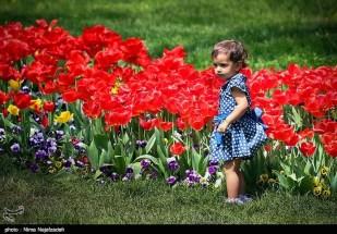 Razavi Khorasan, Iran - Mashhad, Bulbous Flowers Festival 29
