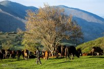 East Azerbaijan, Iran - Kaleybar in spring 2