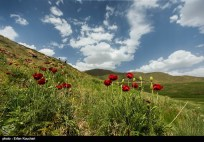 Lar National Park in Tehran and Mazandaran Provinces, Iran 7