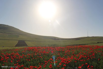 East Azerbaijan, Iran - Arasbaran 110