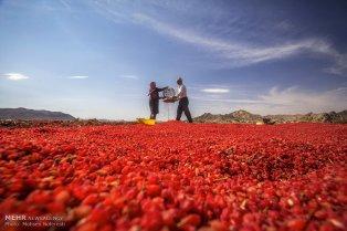 Foto: Mohsen Noferesti / Mehr News