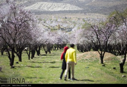 First spring signs in Shiraz - Fars Province, Iran - (Photo credit: Reza Ghaderi / IRNA)