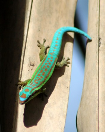 Love these colourful lizards