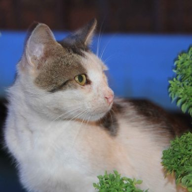 CPOTD (Cat Photo of The Day)