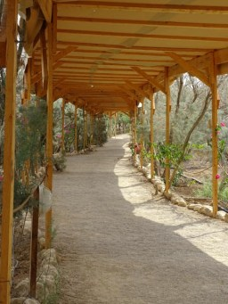 Baptism Site - thankfully shady path to the river