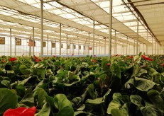 The greenhouses have retractable shadecloth that is adjusted to control light and heat.