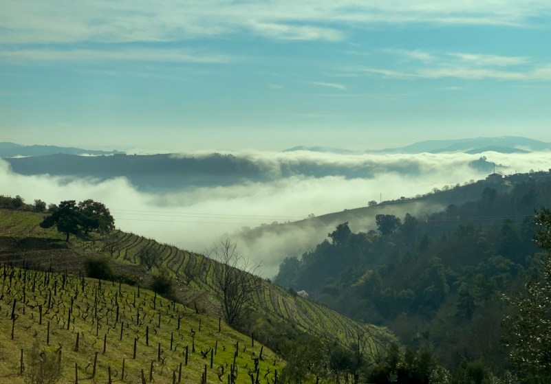 Misty morning in the Douro Valley