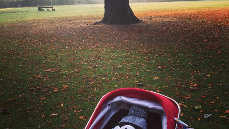 Are all babies obsessed by trees?